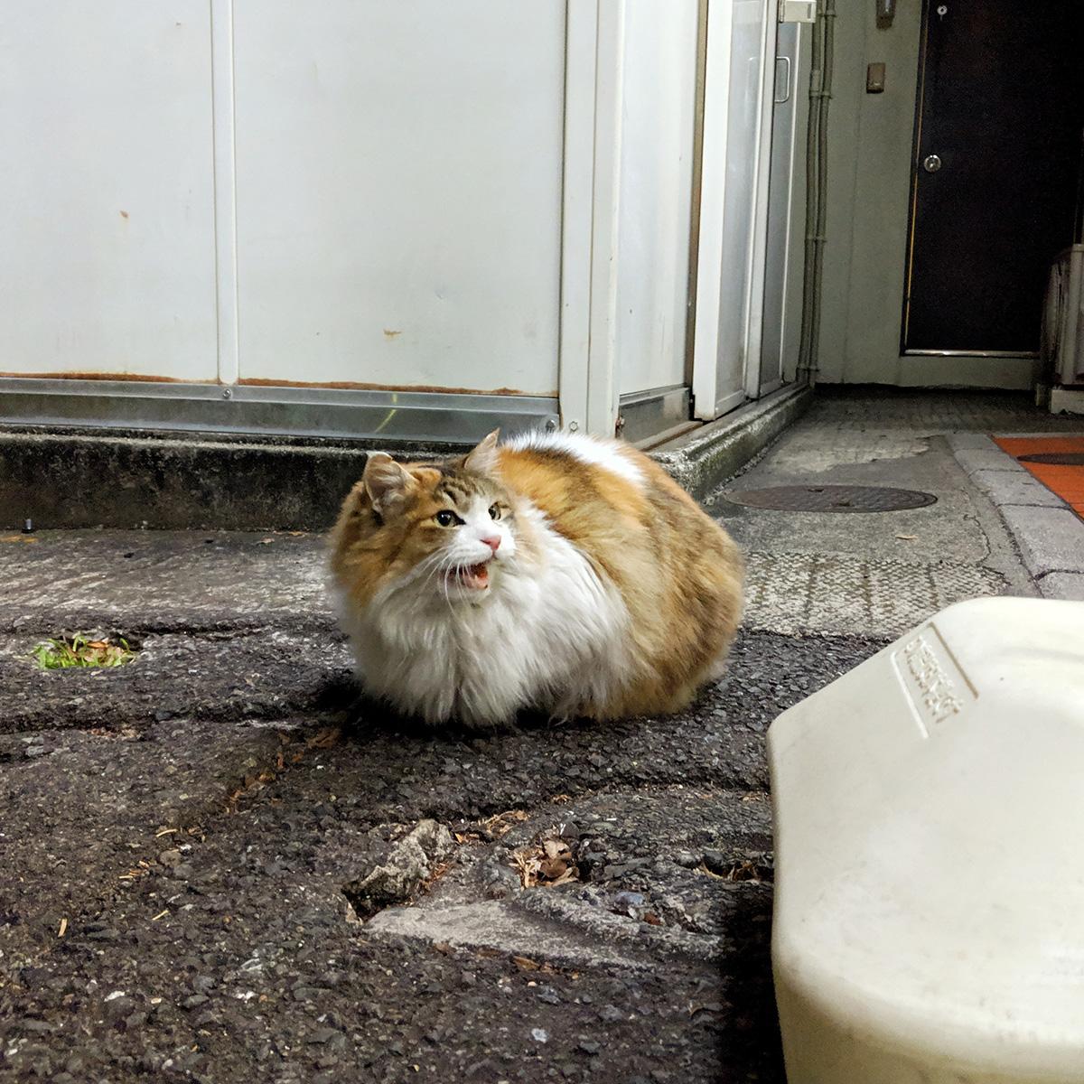 猫になんか言われた